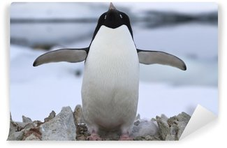 Vinyl-Fototapete Adelie-Pinguin stehend in der Nähe des Nestes Frühlingstag