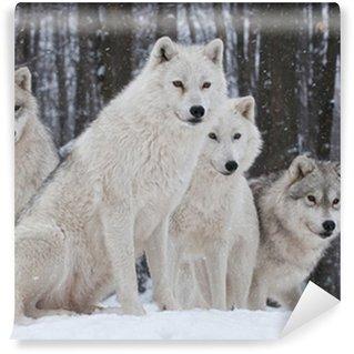 Vinyl-Fototapete Arctic Wolf Pack
