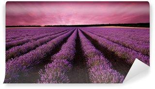 Vinyl-Fototapete Atemberaubende Lavendelfeld Landschaft bei Sonnenuntergang