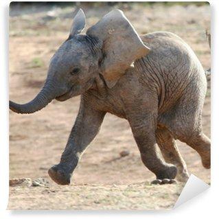 Vinyl-Fototapete Baby Elephant Laufen