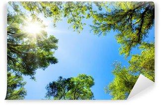 Vinyl-Fototapete Baumkronen umrahmen den sonnigen Himmel