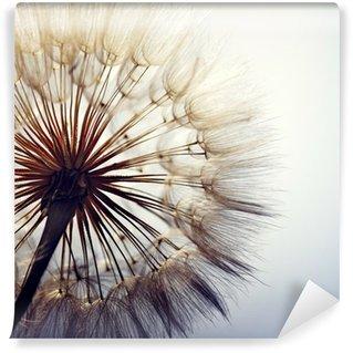 Vinyl-Fototapete big dandelion on a blue background