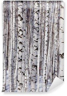 Vinyl-Fototapete Birken wald