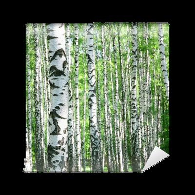 Fototapete birkenstämme  Vinyl-Fototapete Birkenstämme im Frühjahr • Pixers® - Wir leben um ...