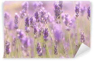 Vinyl-Fototapete Blühende Lavendelzweige