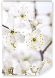 Vinyl-Fototapete Blumen der Kirschblüten an einem Frühlingstag
