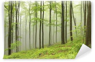 Vinyl-Fototapete Buchen umgeben von Nebel auf einem regnerischen Frühlingstag
