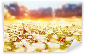 Vinyl-Fototapete Daisy Feld über Sonnenuntergang