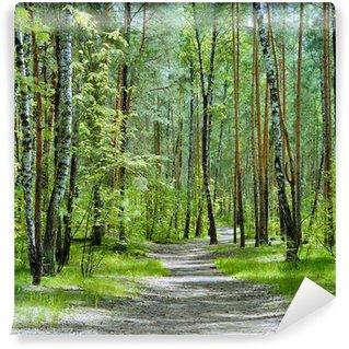 Vinyl-Fototapete Der Weg in den Wald mit Birken und Kiefern in einem Frühlingstag