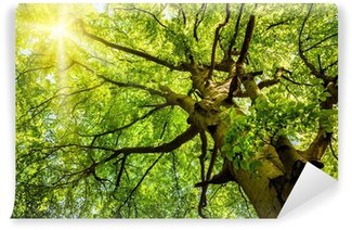 Vinyl-Fototapete Die Sonne scheint durch die Bäume