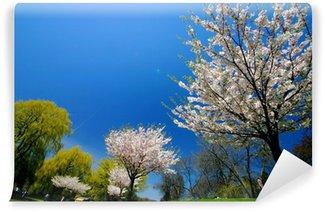 Vinyl-Fototapete Einem schönen Frühlingstag im Park