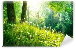 Vinyl Fototapete Frühling Natur. Schöne Landschaft. Grünes Gras und Bäume
