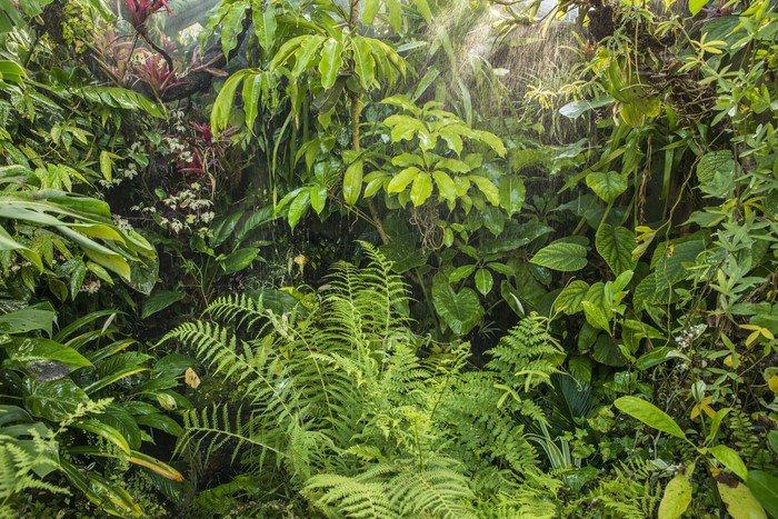 Fototapete tropischer regenwald  Vinyl-Fototapete Grünen tropischen Regenwald Hintergrund • Pixers ...
