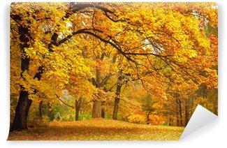 Vinyl-Fototapete Herbst / Gold Bäume in einem Park