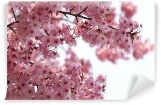 Vinyl-Fototapete Hintergrund der rosa Kirschblüten an einem wunderschönen Frühlingstag