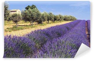 Vinyl-Fototapete Inmitten von Olivenbäumen und Lavendel