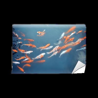 Fototapete koi karpfen schwimmen im teich pixers wir for Koi karpfen teich