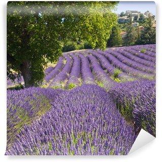 Vinyl-Fototapete Lavendelfeld in Vachères