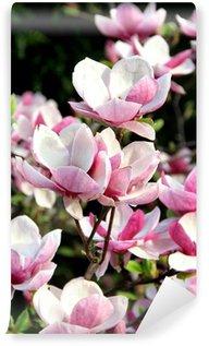 Vinyl Fototapete Magnolia Frühjahr Bäume in voller Blüte