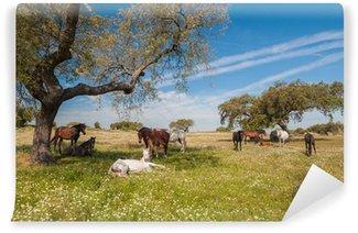 Vinyl-Fototapete Pferde auf der Weide. Frühlingstag. Extremadura, Spanien