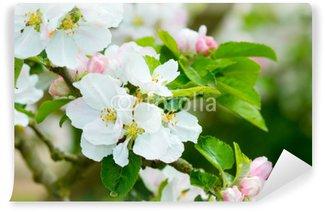 Vinyl-Fototapete Prunus Gattung - Pink Cherry Blossom Blume auf einem warmen Frühlingstag