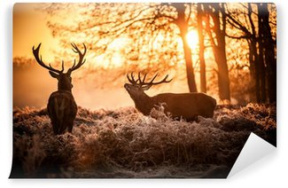 Vinyl-Fototapete Red Deer in Morgensonne.
