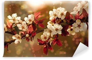 Vinyl-Fototapete Romantische Kirsche Blüten Blüte an einem Frühlingstag