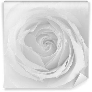 Vinyl-Fototapete Rose, Rose