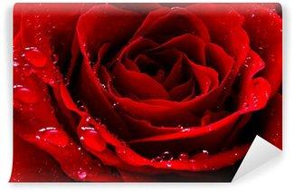 Vinyl-Fototapete Rote Rose mit Wassertropfen