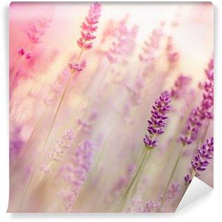 Vinyl-Fototapete Schöne Lavendel im Blumengarten