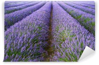 Vinyl-Fototapete Schöne Lavendelfeld Landschaft mit dramatischen Himmel