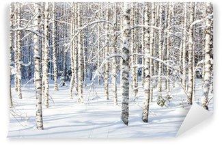 Vinyl-Fototapete Snowy Birkenstämmen