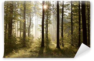 Vinyl-Fototapete Sonnenstrahlen an einem nebligen Morgen im Wald