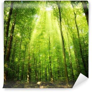 Vinyl-Fototapete Sonnenstrahlen im buchenwald