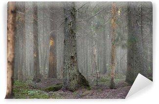 Vinyl-Fototapete Wald im Nebel
