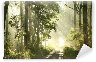 Vinyl-Fototapete Waldweg an einem nebligen Frühlingsmorgen nach dem regen