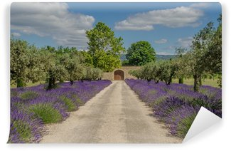 Vinyl-Fototapete Weg mit blühenden Lavendel
