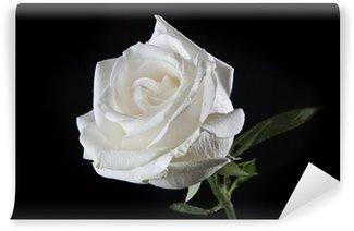 Vinyl-Fototapete White rose