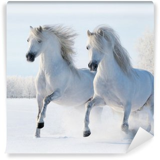 Vinyl-Fototapete Zwei weiße Pferde, die im Schnee galoppieren