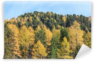 Fototapet av Vinyl Alp skog