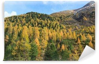Fototapet av Vinyl Alp woods