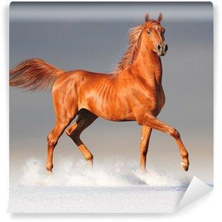 Fototapet av Vinyl Arabisk häst på vintern