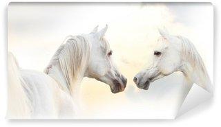 Fototapet av Vinyl Arabisk vit häst