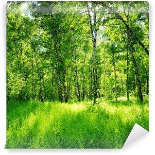 Fototapet av Vinyl Björkskog på en solig dag. Gröna skogar i sommar
