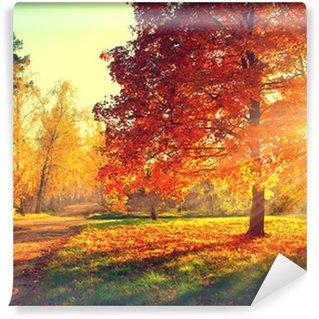 Efterårs scene. Efterår. Træer og blade i sollys Vinyl Fototapet
