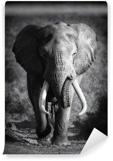 Fototapet av Vinyl Elefant Bull (Konstnärlig bearbetning)
