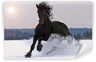 Fototapet av Vinyl Frisiska hästen på snö