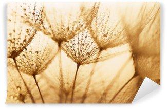 Fototapet av Vinyl Frön med vattendroppar