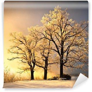Fototapet av Vinyl Is och frost täckte Oak Tree i Cold Winter Snow