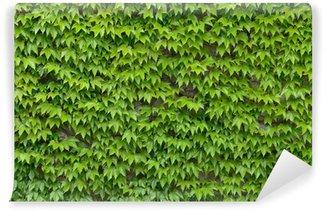 Fototapet av Vinyl Ivy vägg bakgrund